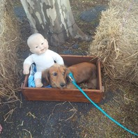 Dog in the manger